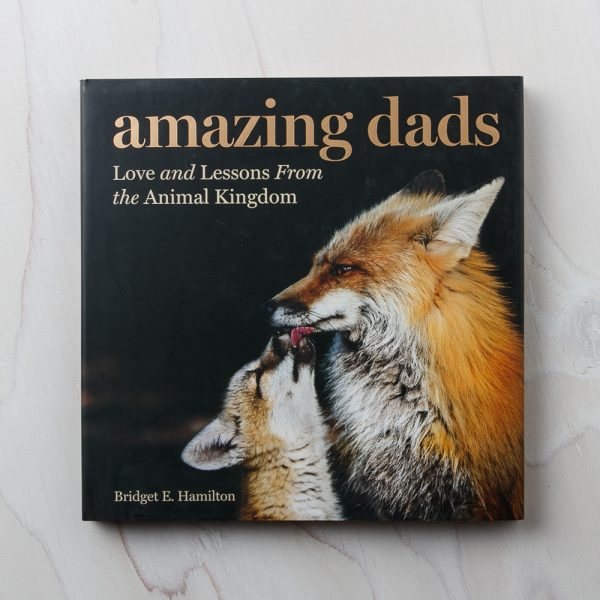 amazing dads book