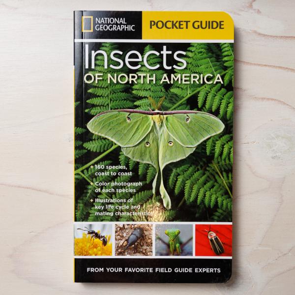ng insects