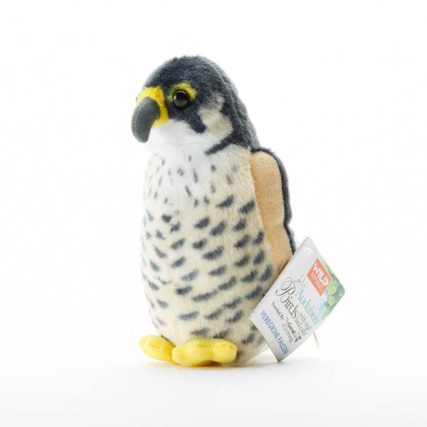 aud peregrine falcon