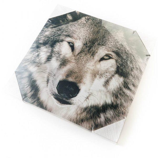 close up wolf canvas