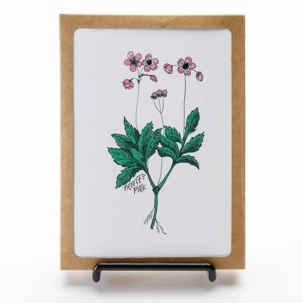medicinal herbs greeting cards