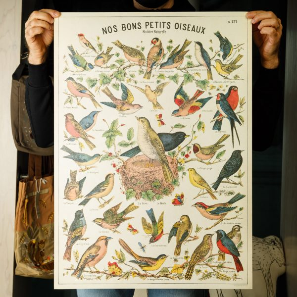 cavallini bird poster