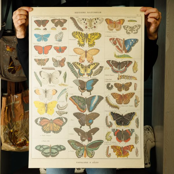 cavallini butterflies natural history poster