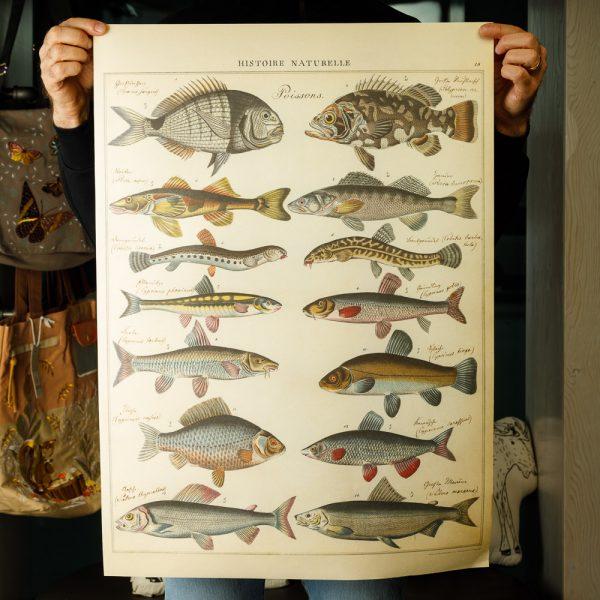 cavallini fish poster
