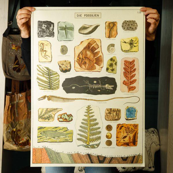 cavallini fossils poster
