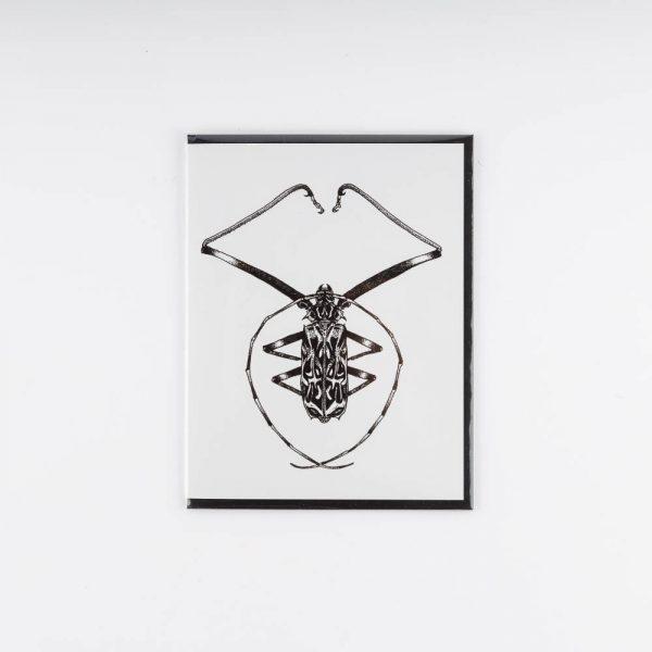 erin greenough harlequin beetle