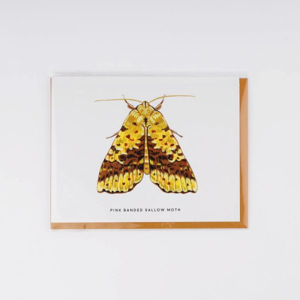 pink banded sallow moth card