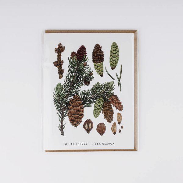 white spruce card